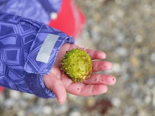 chestnut child hand