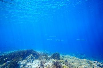 Underwater sunlight scena coral reef