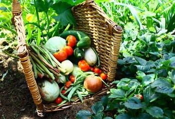 panier de légumes bio d'été