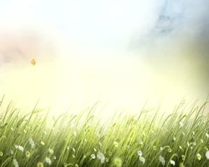 ветер  в  траве