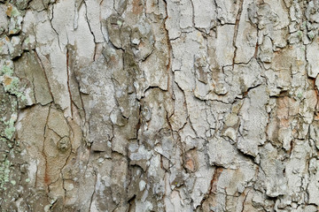 Textured Bark Of A Tree Trunk