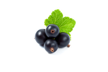 Isolated black currant