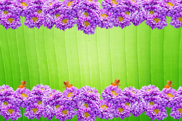 Beautiful violet chrysanthemum flower frame