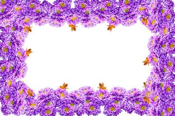Beautiful violet chrysanthemum flower frame