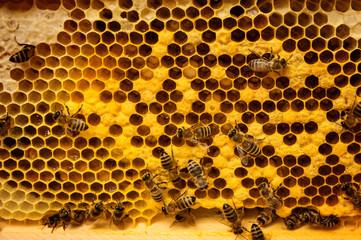 Bienenvolk auf Waben
