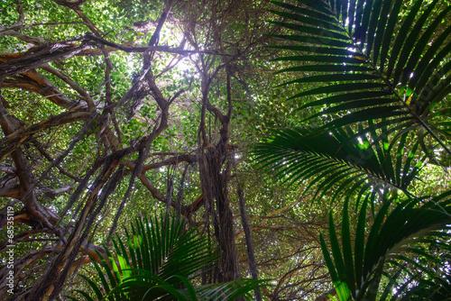 Fotobehang Palm boom Tropical vegetation
