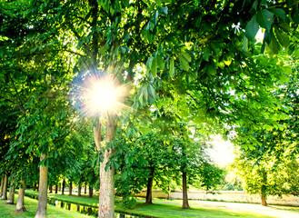 Sommer im Park :)