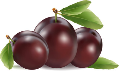 Plum vector isolated