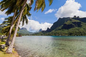 Palme e montagne sullo sfondo. Moorea, Polinesia francese