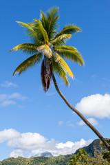 Palma in polinesia francese con l'isola di sfondo