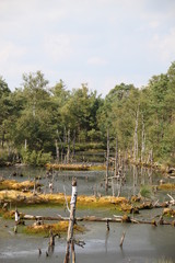 Pietzmoor - Ausflugsziel in der Lüneburger Heide
