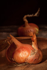 Onions vertical