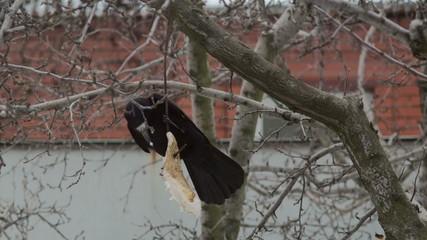 Crow Attacks 6