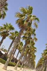 Palm Trees, Malvarrosa Beach, Valencia