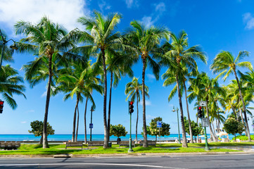Palms in Honolulu, Hawaii, United States