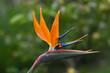 canvas print picture - Fiore del Paradiso