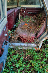 a car, trapped in the bushes