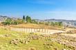 The Oval Forum and Cardo Maximus in ancient Jerash, Jordan