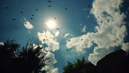 Birds Against Blue Sky