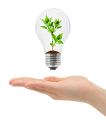 Hand and bulb with plant