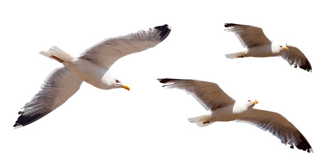 Set of flying seagulls. Isolated over white