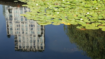 Lilly Pads, Pond Koi, Highrise Reflection