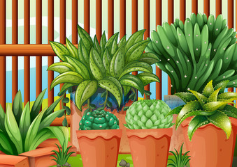 Pots with plants