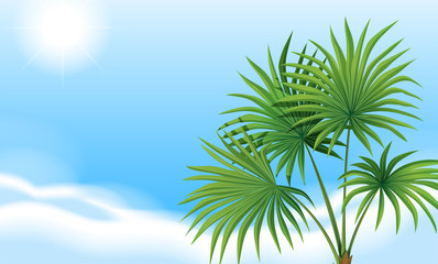 A palm plant and a clear blue sky