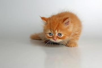 Katze schleicht sich an