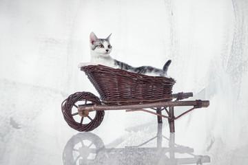 Katze im Wagen