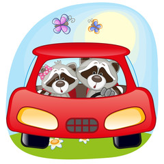 Two Raccoons in a car