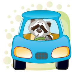Raccoon in a car
