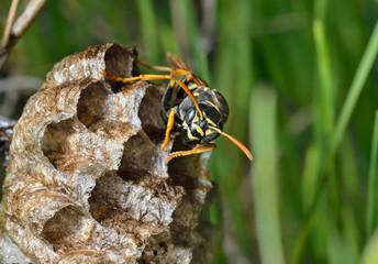 Small wasp 5