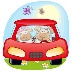 Two Sheep in a car