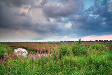 clouded sky over wildflowers in summer