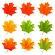 Set of autumn maple leaves
