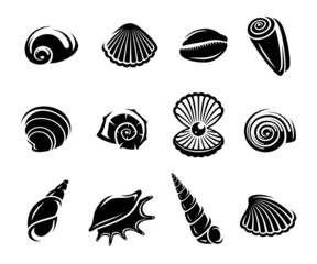 Seashells set. Vector