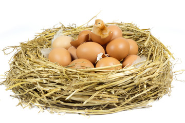 Nest with Brown Eggs and Little Chicken Isolated on White