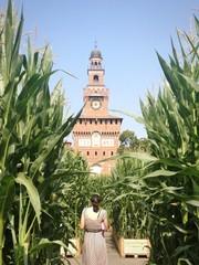Milano il Castello Sforzesco in un campo di maia