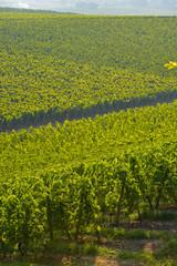 Vineyard landscape-Vineyard south west of France, Bordeaux Viney