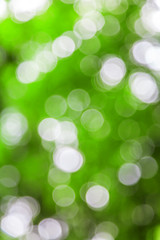 Green defocused lights useful as a background