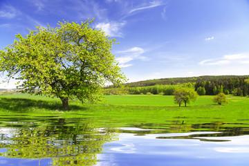 Summer landscape in Czech Republic