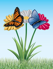 Butterflies On Daisies