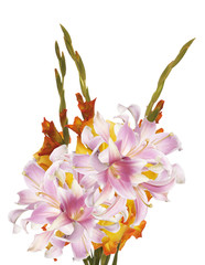 Gladiolus.Bouquet