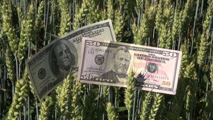 agriculture business money growth concept on wheat