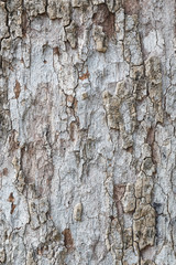 Tree bark texture wallpaper and background