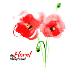 Beautiful watercolor paint red poppy. Vector illustration