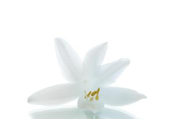 beautiful flower hosta