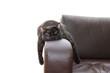 Leinwandbild Motiv hangover cat