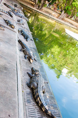 Crocodiles in Thai farm, Thailand